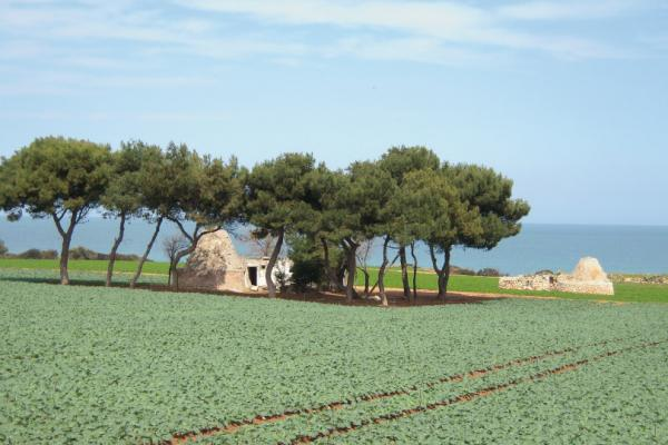 Apulian countryside
